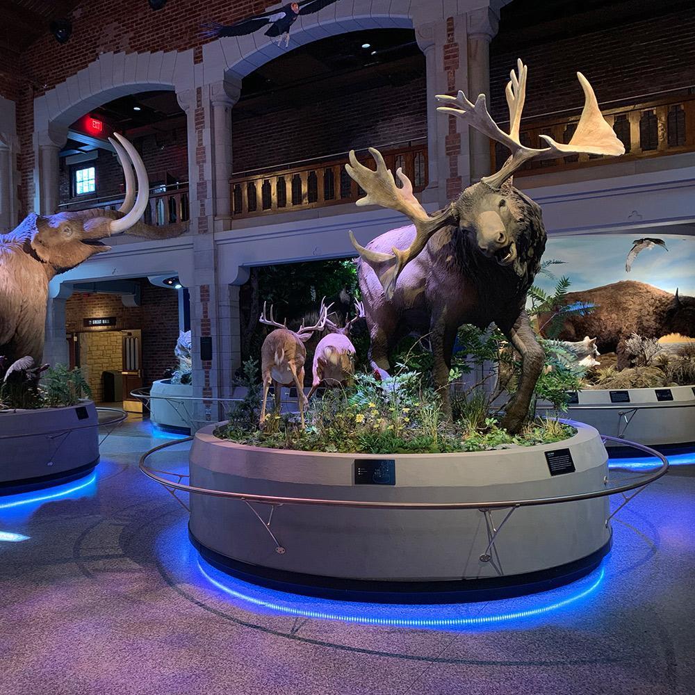 Museum LED Lighting: ProMedica Museum of Natural History
