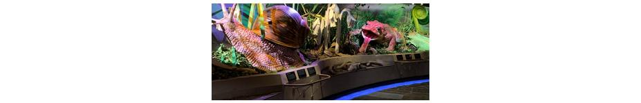 Museum Lighting: ProMedica Museum of Natural History